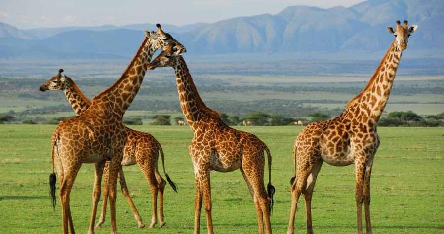آشنایی با جاذبه های گردشگری آفریقا (+تصاویر)
