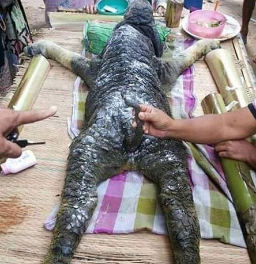 عکس های جانوری ترسناک با سرِ کروکودیل و بدن بوفالو