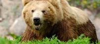 مرد شجاعی که خرس 800 کیلویی را بغل کرد (عکس)