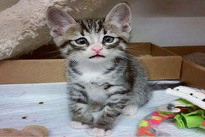 عکس های باحال از یک گربه ناز با چشمان لوچ