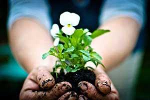 خصوصیات ممتاز همسرانی که عاشق باغبانی هستند