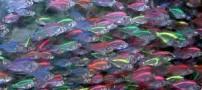 کشف ماهی های عجیب از جنس شیشه (عکس)