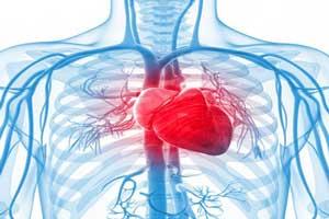 دانستنی های جالب و خواندنی درباره قلب انسان