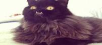 عکس های گربه ای با دندان و چشمان شبیه به شیطان