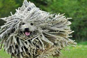 عکس هایی دیدنی و جالب از عجیب ترین سگ های جهان