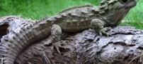 جانوری سه چشم که 38 سال یکبار تخم گذاری میکند (عکس)