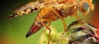 وجود حشرات در کره زمین چه فوایدی دارد؟