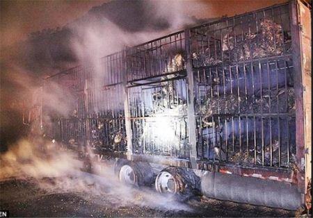 فاجعه اسفبار سوختن 300 بز زنده در آتش سوزی (عکس)