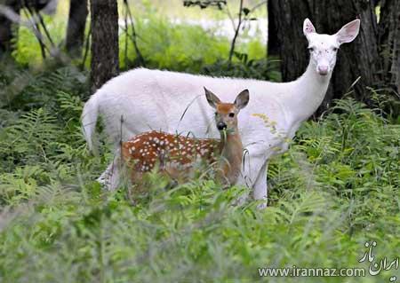عکس حیوانات بامزه با مشکل ژنتیکی زالی