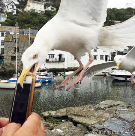 شهری عجیب که در آن پرندگان دزدی می کنند (عکس)