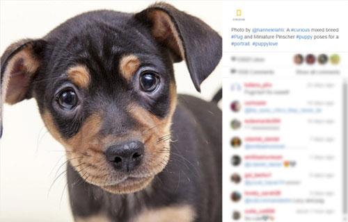 عکسهای دیدنی نایاب از معصومیت در نگاه و چهره حیوانات