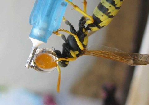 عکسهای دیدنی و ناب از لحظه آب خوردن زنبور عسل