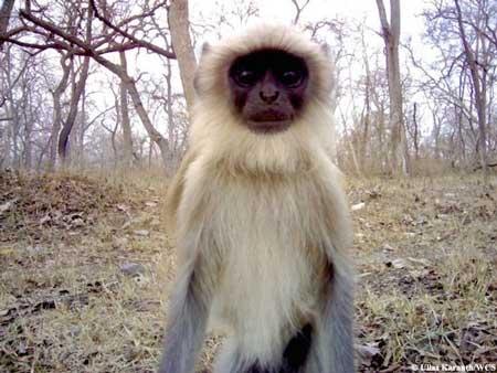 عکس های خنده دار از جنون عکس سلفی در حیوانات