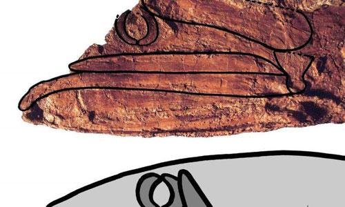 عجیب ترین ماهی 92 میلیون ساله کشف شد (عکس)