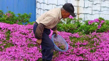 مهربان ترین شوهر دنیا این مرد ژاپنی است! (عکس)