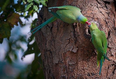 تصاویر عاشقانه و جالب از حیوانات