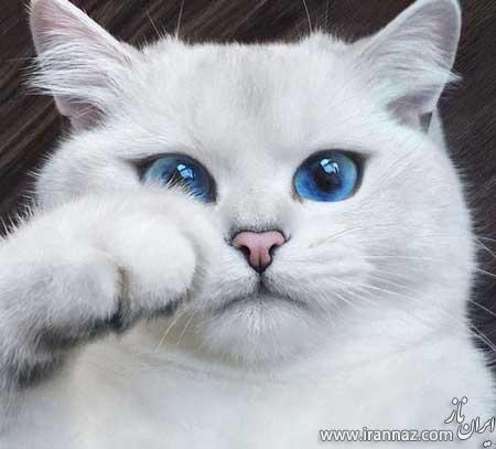 تصاویر گربه ای که زیباترین چشم های جهان را دارد