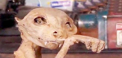 کشف مومیایی موجود منقرض شده عجيب و غريب (عکس)