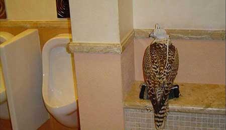 شیر و یوزپلنگ حیوانات خانگی عرب های اماراتی (عکس)