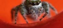 8 عکس برتر و دیدنی از دنیای حیوانات و حیات وحش