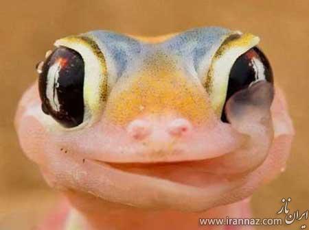 عکسهای باحال و دیدنی از خنده حیوانات
