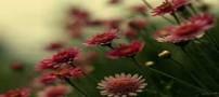 شعر زیبای خوشا بهارا از ملکالشعرای بهار