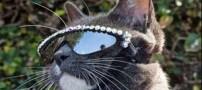 گربه که مجبور است همیشه عینک آفتابی بزند (عکس)
