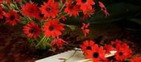 جملات زیبا و قصار در وصف روز نیکوکاری