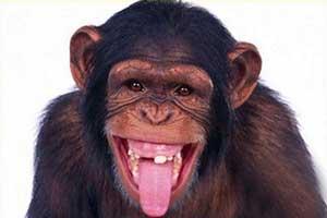 خنده دار ترین ویدئوی یوتیوب با 17000 بازدید (عکس)