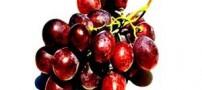 حکایت خواندنی جدال 4 مرد بر سر انگور