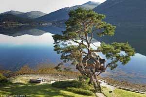 عکس های دیدنی و جالب از عاشقانه ترین خانه درختی