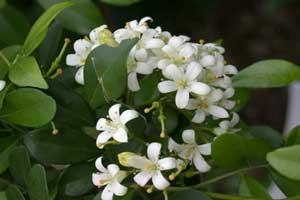 آشنایی با گیاهان سنتی معطر خانگی