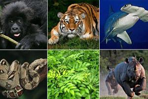 آشنايي با كشنده ترين جانوران دنيا براي انسان!!