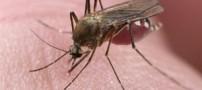 آیا حشرات انتقال دهنده بیماری ایدز هستند؟
