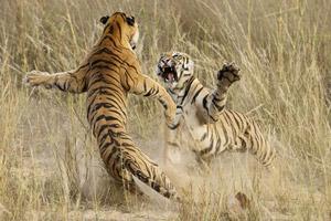برترین عکس های طبیعت به انتخاب نشنال جئوگرافیک