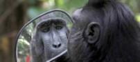 میمونی که از دیدن چهره اش در آینه وحشت زده شد (عکس)