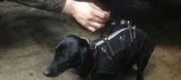 این سگ باحال دستیار تعمیرکار ماشین شده (عکس)