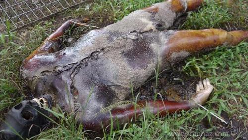 تصاویری باور نکردنی از تجزیه بدن انسان بعد از مرگ (18+)