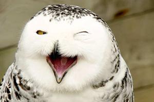 تصاویر دیده نشده از خندیدن حیوانات