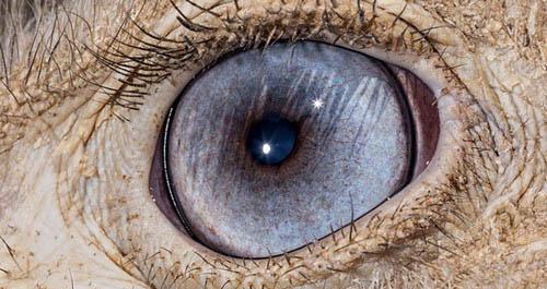عکس های باورنکردنی از چشم حیوانات  عکس های باورنکردنی از چشم حیوانات 12 10