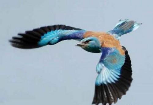 پرنده های گینسی را بشناسید!! (عکس)