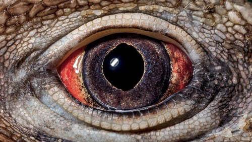 عکس های باورنکردنی از چشم حیوانات  عکس های باورنکردنی از چشم حیوانات 13 10