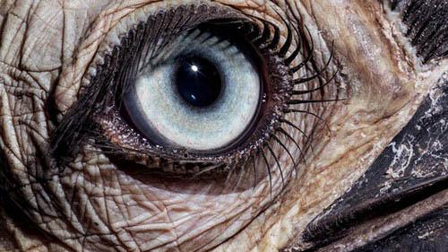 عکس های باورنکردنی از چشم حیوانات  عکس های باورنکردنی از چشم حیوانات 14 12