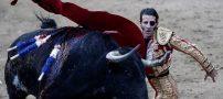 ماتادور یک چشم زخمی در زیر سم گاو وحشی (عکس)
