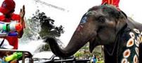 فستیوال جشن آب جوانان تایلندی با فیل