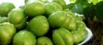 برای جلوگیری از نفخ گوجه سبز با گلپر بخورید