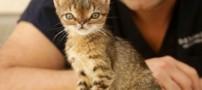 چهره ی بامزه ی گربه مبتلاء به سندروم داون (عکس)
