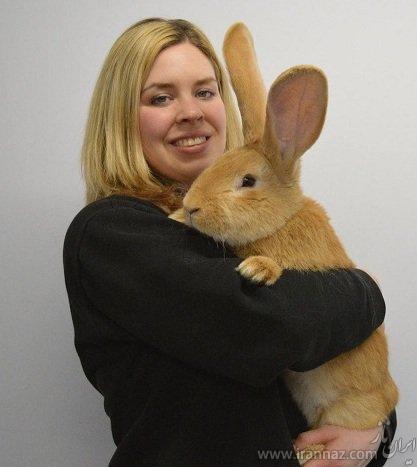 این خرگوش غول پیکر شما را متعجب میکند (عکس)