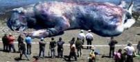 موجود عجیب در ساحل چالوس !! (عکس)