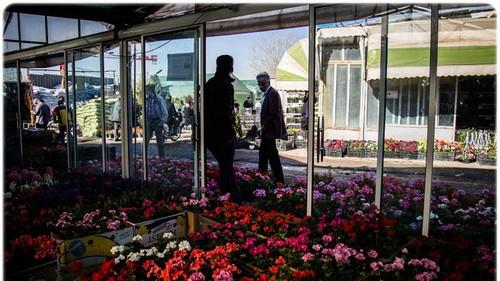 تصاویر زیبا و دیدنی از بازار گل تهران  تصاویر زیبا و دیدنی از بازار گل تهران 1463228961 irannaz com